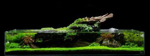 Hướng dẫn làm một bể cá mini thủy sinh tuyệt đẹp cho ngôi nhà bạn